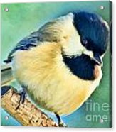 Chickadee Greeting Card Size - Digital Paint Acrylic Print
