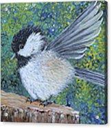 Chickadee Landing Acrylic Print