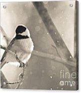 Chickadee Sparkles Acrylic Print