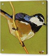 Chickadee V Acrylic Print
