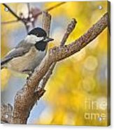 Chickadee With His Prize Acrylic Print