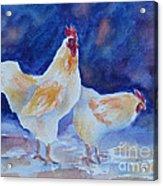 Chicken Duo Acrylic Print