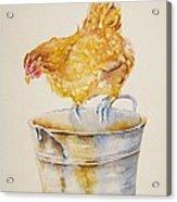 Chicken Feed Acrylic Print