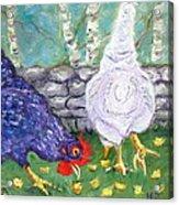 Chicken Neighbors Acrylic Print