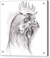 Chicken Portrait In Charcoal Acrylic Print