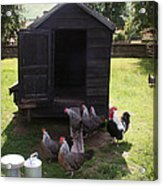 Chicken Run Acrylic Print by Stephen Norris