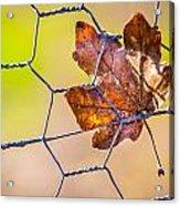 Chicken Wire Leaf. Acrylic Print