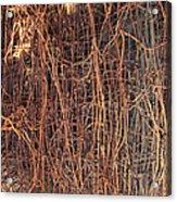 Chickenwire Rusty Acrylic Print