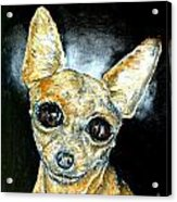 Chihuahua Angel Acrylic Print by Jay  Schmetz