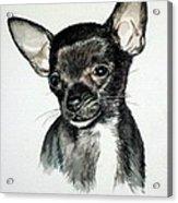 Chihuahua Black 2 Acrylic Print
