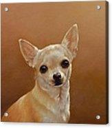 Chihuahua I Acrylic Print