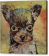 Chihuahua Acrylic Print by Michael Creese