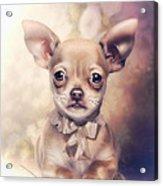 Chihuahua Puppy Acrylic Print