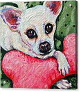 Chihuahua Who Came To Visit Acrylic Print