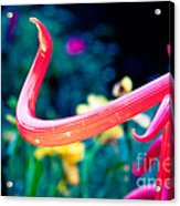 Chihuly In Fushia Acrylic Print by Sonja Quintero
