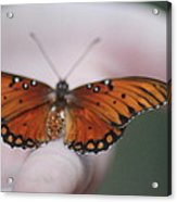 Child And Butterfly - We Shall Renew Again Acrylic Print