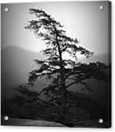 Chimney Rock Lone Tree In Black And White Acrylic Print