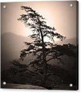 Chimney Rock Lone Tree In Sepia Acrylic Print