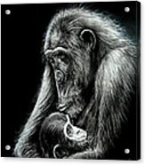 Chimp Love Acrylic Print