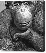 Chimpanzee Carving Acrylic Print