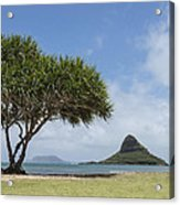 Chinamans Hat With Tree - Oahu Hawaii Acrylic Print