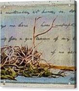 Chincoteague Driftoods Acrylic Print