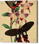 Chinese Butterflies Acrylic Print by Philip Ralley