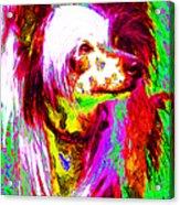 Chinese Crested Dog 20130125v2 Acrylic Print