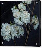 Chinese Flowers Acrylic Print