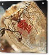 Chinese Lantern Plant - H Acrylic Print