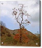 Chino Hills Tree Acrylic Print