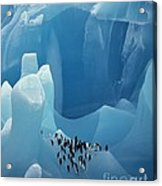 Chinstrap Penguins On Blue Iceberg Acrylic Print