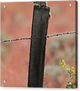 Chipmunk On Fence Post Acrylic Print