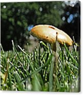 Chipmunks View Of A Mushroom Acrylic Print