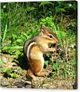Chippy Acrylic Print
