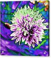 Chive Acrylic Print