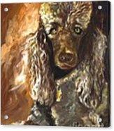 Chocolate Poodle Acrylic Print