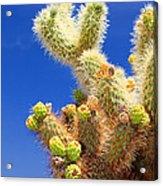 Cholla Cactus I By Diana Sainz Acrylic Print