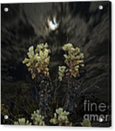 Cholla Light - Joshua Tree National Park Acrylic Print