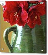 Christmas Amaryllis Acrylic Print