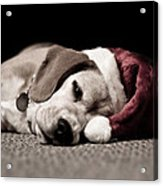 Christmas Beagle Acrylic Print by Paulina Szajek