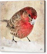 Christmas Card 9 Acrylic Print