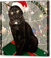 Christmas Cat Acrylic Print