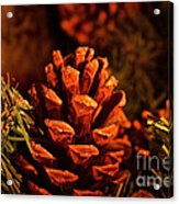 Christmas Cone Acrylic Print