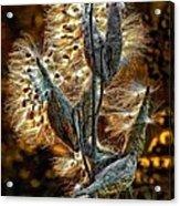 Christmas Floozy Acrylic Print