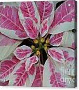 Christmas Floral Acrylic Print