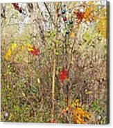 Christmas In Nature Acrylic Print