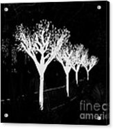 Christmas Lights In Black And White Acrylic Print