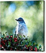 Christmas Mockingbird Acrylic Print