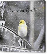 Christmas Peace Acrylic Print